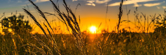 A importância da tecnologia no desenvolvimento da agricultura