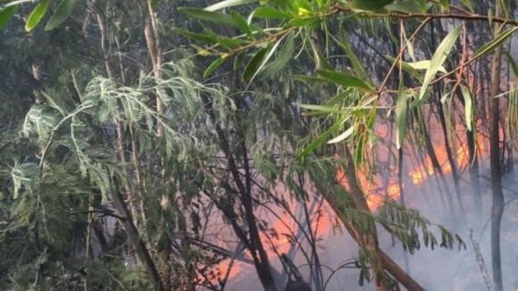 Incêndio florestal em Paredes ameaça habitações