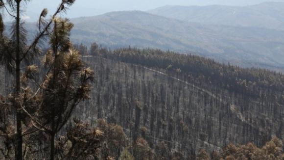 Mais de 61 mil hectares de área ardida até 30 de junho