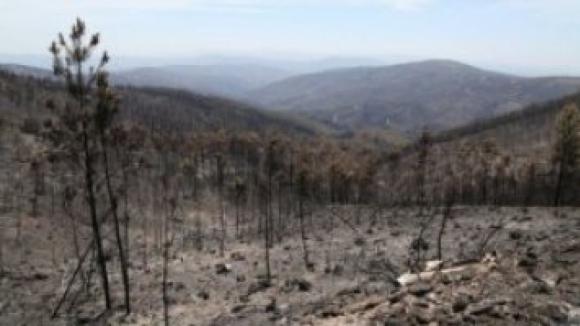 """Governo apoia """"exclusivamente"""" proprietários que cumpram regras de ordenamento florestal"""