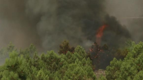 Dominado fogo que queimou vasta área de pinhal em Ribeira de Pena