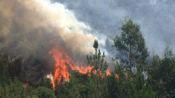 """Incêndio em Vila Pouca de Aguiar """"praticamente dominado"""""""