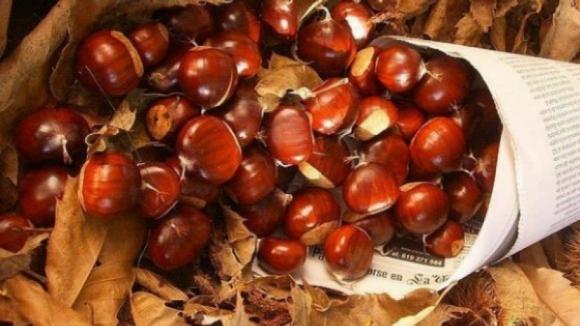 Produtores de castanha de Bragança querem os mesmos apoios do Algarve