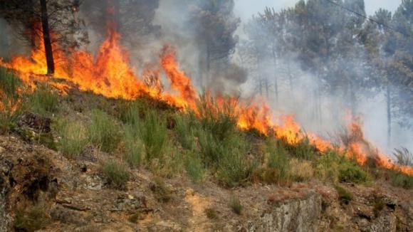 Lista de agricultores afetados pelos incêndios e montantes pagos pelo Estado divulgada esta semana