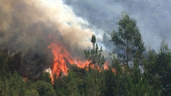 Fogo em Mirandela mobiliza 122 bombeiros apoiados por 4 meios aéreos