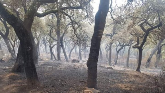 Perímetro do fogo no Algarve já ultrapassa 100 quilómetros, há 299 deslocados