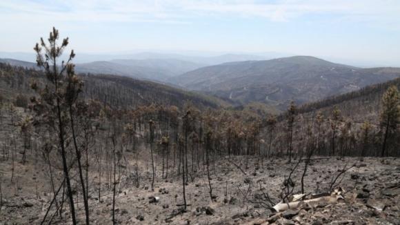 Identificadas este ano 1.142 freguesias com alto risco de incêndio