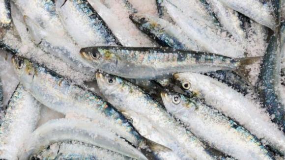 Pesca da sardinha proibida a partir de sábado