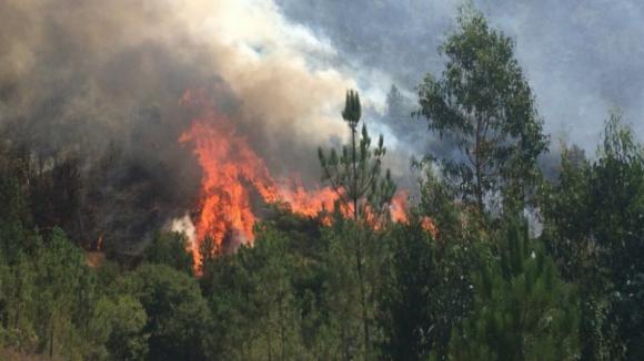 Incêndios: Área ardida este ano aumentou, totalizando 41.014 hectares