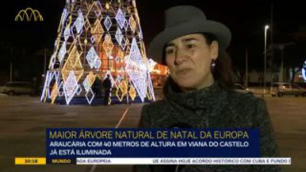 A maior árvore natural de Natal da Europa 'mora' em Viana do Castelo